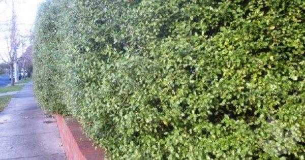 Driveway Border Plants